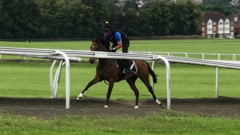 Act Naturally on the gallops two days after her date in the Tattersalls ring