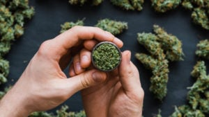 A close-up shot of hands holding a grinder with cannabis buds in the background representing aurora stock.